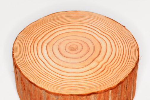 Continuity「Tree trunk, cross-section, annual rings」:スマホ壁紙(0)