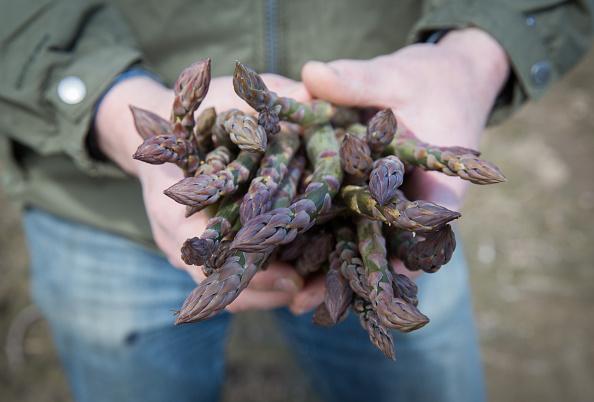 Asparagus「Asparagus Farming In Devon」:写真・画像(5)[壁紙.com]