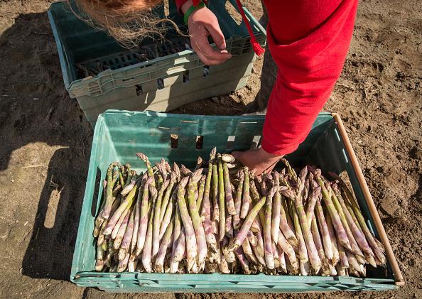 Asparagus「Asparagus Farming In Devon」:写真・画像(7)[壁紙.com]