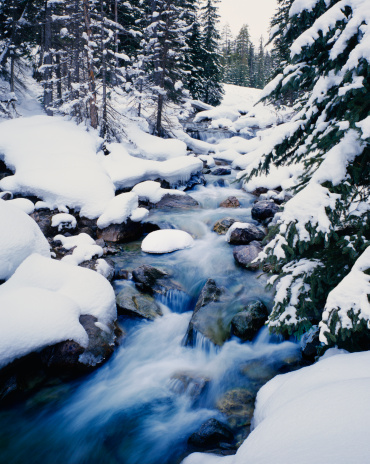 コロラド州「雪の冬の石造りの松の木アロング・ラッシングストリーム」:スマホ壁紙(16)