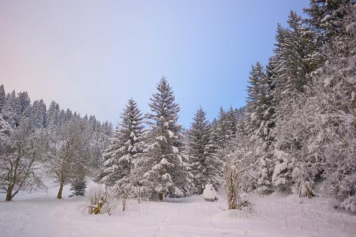 グルノーブル「Winter snowy landscape」:スマホ壁紙(10)