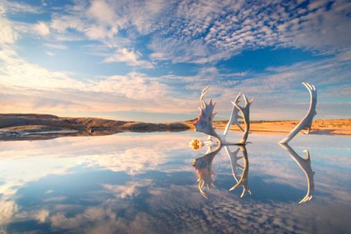 Baffin Island「Caribou skull and antlers reflected in pond, sunrise」:スマホ壁紙(6)