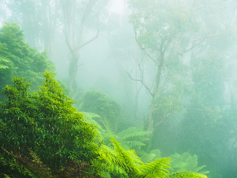 Fog「Australia, New South Wales, Katoomba, Rainforest in fog」:スマホ壁紙(2)