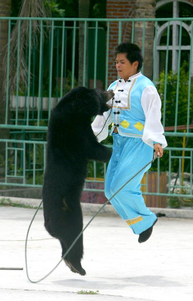 Cancan Chu「Animals Perform For Tourists In China」:写真・画像(5)[壁紙.com]