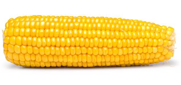 Sweet yellow corn on white background:スマホ壁紙(壁紙.com)