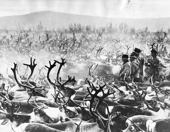 People「Herd Of Reindeer」:写真・画像(19)[壁紙.com]