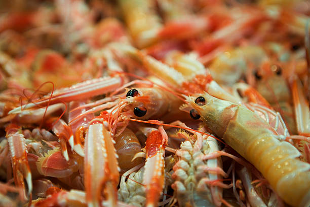 Fresh gamba prawns at Mercado de Santa Catalina fish market.:スマホ壁紙(壁紙.com)