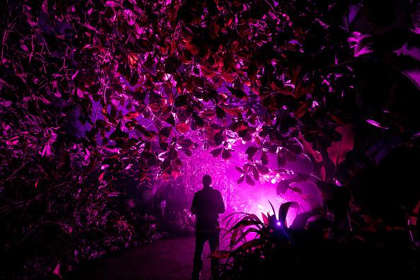 Holiday - Event「Eden Project Lights Up For Christmas」:写真・画像(0)[壁紙.com]
