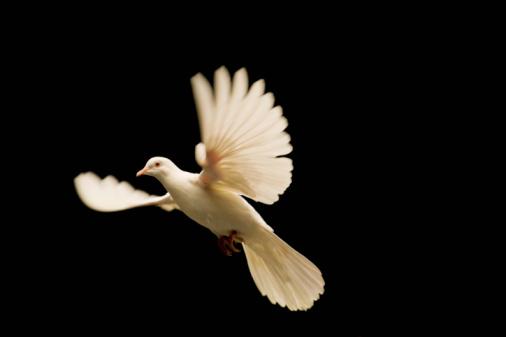Bird「White Dove Release」:スマホ壁紙(14)