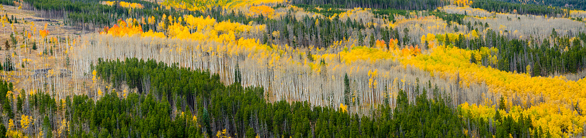 Aspen Tree「Aspens in the Colorado Rocky Mountains」:スマホ壁紙(18)