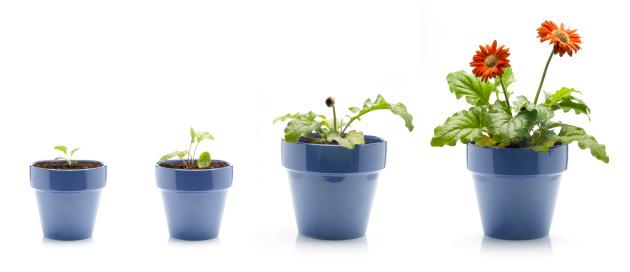 Growth「Gerbera Daisy Growing」:スマホ壁紙(16)