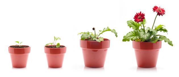 Continuity「Gerbera Daisy Growing」:スマホ壁紙(6)