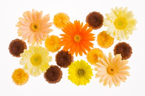 flower「Gerbera Daisy」:スマホ壁紙(14)