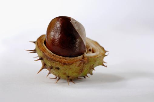 栗「Chestnut」:スマホ壁紙(4)