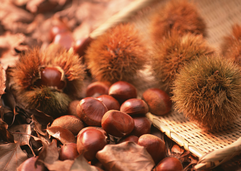 栗「Chestnut」:スマホ壁紙(17)