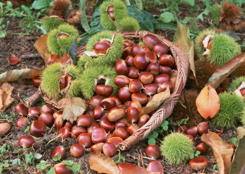 chestnut「Chestnut」:スマホ壁紙(18)