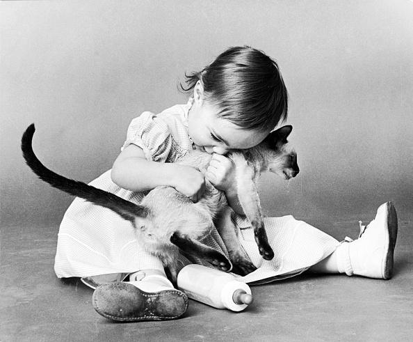 Animal「Kitten Child」:写真・画像(15)[壁紙.com]