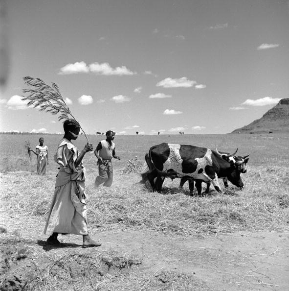 Millet「Millet Threshing」:写真・画像(1)[壁紙.com]