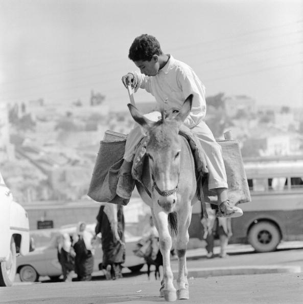 Working Animal「Donkey Rider」:写真・画像(3)[壁紙.com]