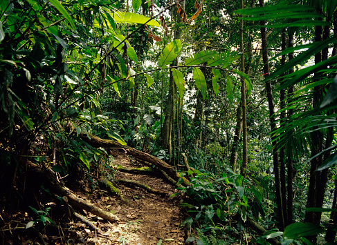 International Biosphere Reserves「View of tropical rain forest」:スマホ壁紙(11)