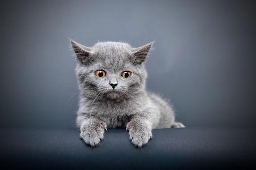 子猫「misty」:スマホ壁紙(6)