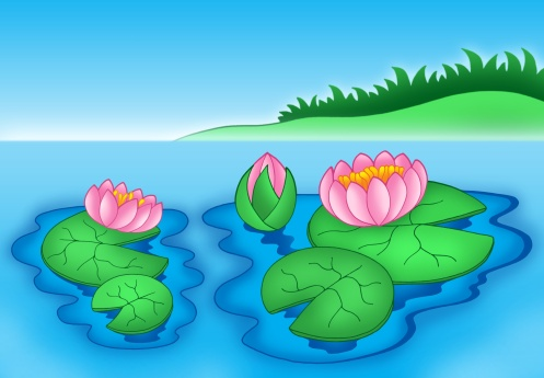 Water Lily「Pink water lilies 2 - color illustration.」:スマホ壁紙(18)