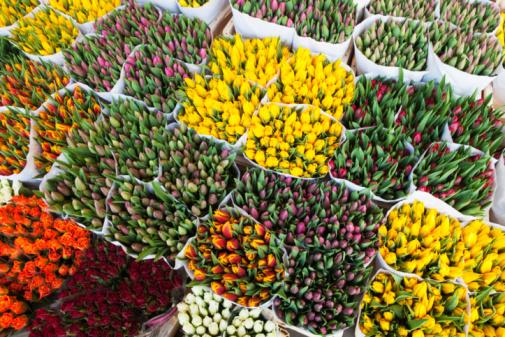 Market Stall「Tulips, Amsterdam」:スマホ壁紙(15)
