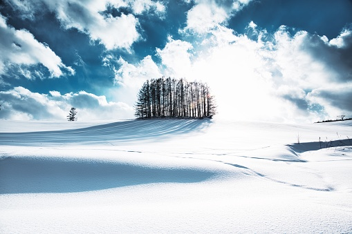 Hokkaido「Larch forest on the snow hill and blue sky in Biei」:スマホ壁紙(19)