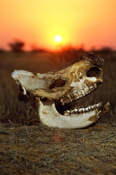 Tom Stoddart Archive「Rhinoceros Skull」:写真・画像(16)[壁紙.com]