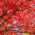 赤沢自然休養林壁紙の画像(壁紙.com)