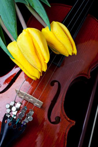Violin「Yellow tulips and violin」:スマホ壁紙(10)