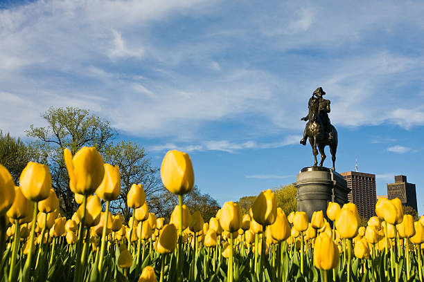Yellow Tulips and George Washington:スマホ壁紙(壁紙.com)