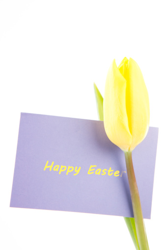 母の日「Yellow tulip with a mauve happy Easter card on a white background」:スマホ壁紙(13)