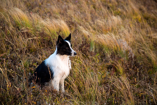 Eco Tourism「The dog」:スマホ壁紙(14)