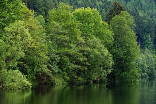 Germany「Blackforest」:スマホ壁紙(8)
