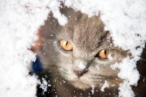 子猫「キトン覗きユキコウィンドウ」:スマホ壁紙(17)