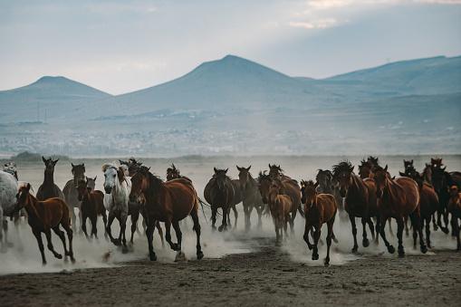 Horse「Herd of wild yilki horses running gallop in dust」:スマホ壁紙(18)