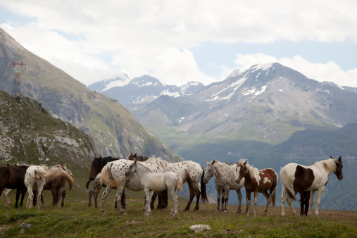 Val d'Isere「Herd of wild ponies (Equus ferus) grazing high up in the mountains in Val d'Isere, France in the summer.」:スマホ壁紙(14)