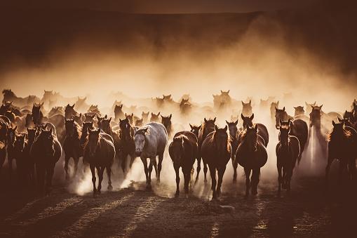Horse「Herd of Wild Horses Running in Dust」:スマホ壁紙(11)