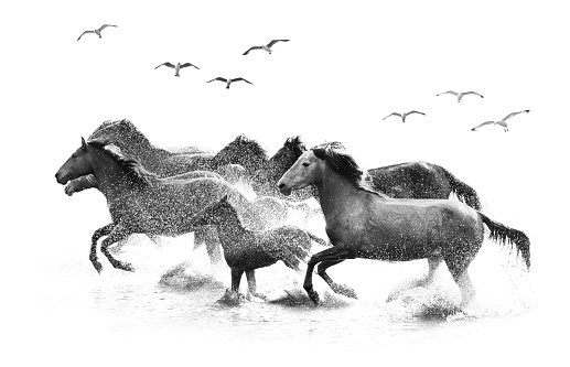 Animals In The Wild「Herd of Wild Horses Running in Water」:スマホ壁紙(13)