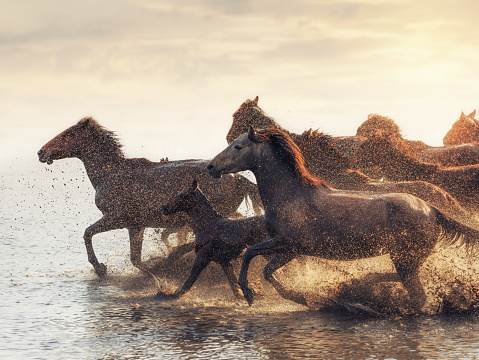 Shallow「Herd of Wild Horses Running in Water」:スマホ壁紙(8)