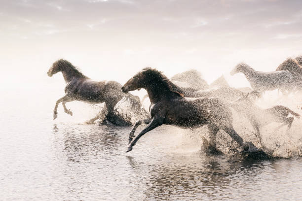 Herd of Wild Horses Running in Water:スマホ壁紙(壁紙.com)