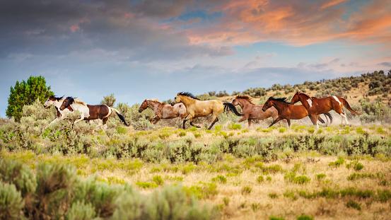 Stallion「Herd of Wild Horses Running Utah USA」:スマホ壁紙(18)