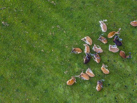Animals In The Wild「Herd of wild red deer in the Phoenix Park, Dublin, Ireland」:スマホ壁紙(8)
