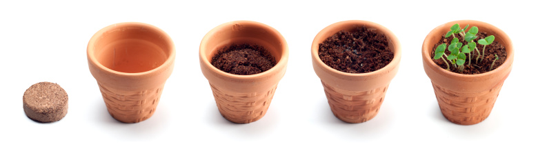 Continuity「Growth Series」:スマホ壁紙(10)
