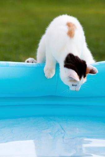 Mixed-Breed Cat「cat at pool」:スマホ壁紙(17)