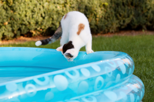 Mixed-Breed Cat「cat at pool」:スマホ壁紙(13)
