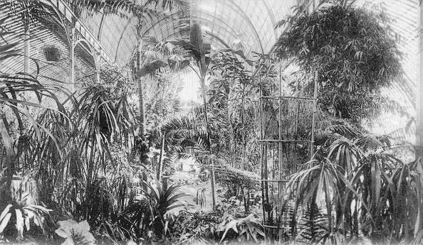 Greenhouse「Winter Garden」:写真・画像(16)[壁紙.com]