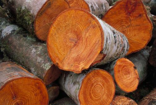 Log「Firewood Cut into Sections」:スマホ壁紙(12)