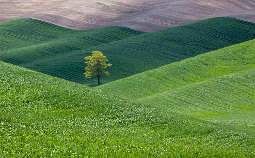 寂しさ「Lone tree in wheat field, Palouse Region, Washington State, USA」:スマホ壁紙(19)